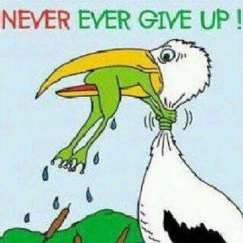 never die attitude